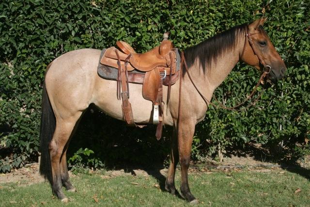 so I decided to go horsebackriding…